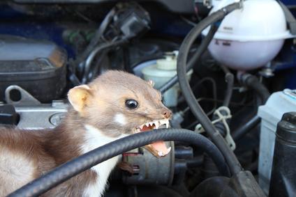 Marderbiss im Auto