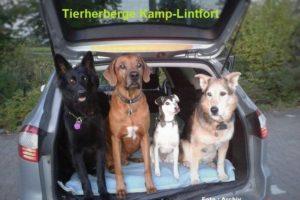 Hunden droht im Auto der qualvolle Hitzetod