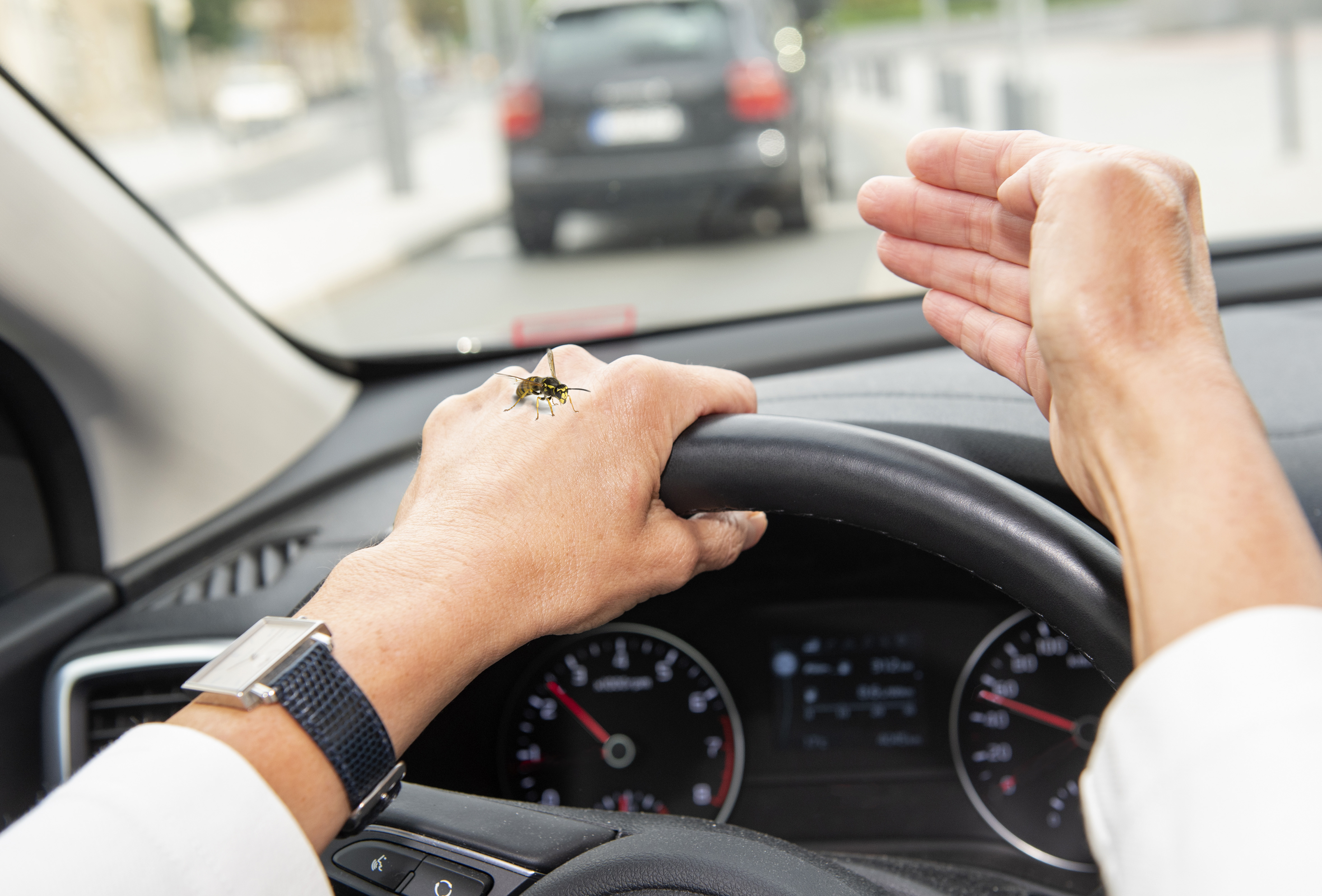 Wespen im Auto Gefahr