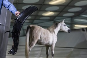 """Ursache und Abhilfe? Der Kotflügel aus den """"33 Extras"""" im Mercedes-Benz Museum schützt vor aufgewirbeltem Straßenschmutz. Doch Pferde, lange Zeit die wichtigste Antriebsquelle im Straßenverkehr, sind keineswegs die einzige Quelle für den Schmutz auf der Straße."""